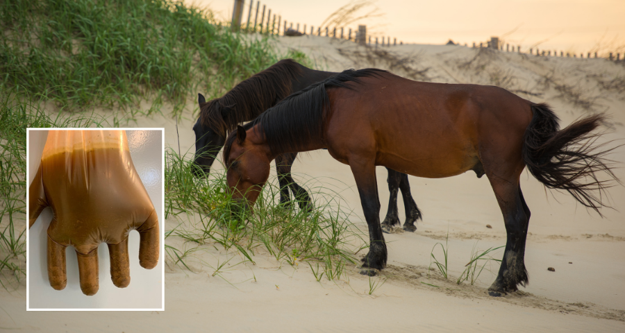 Sand colic in horses