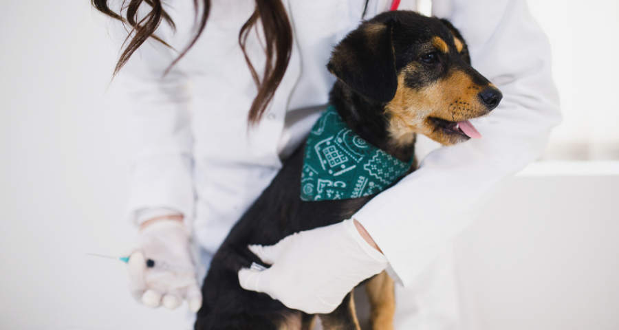 The Routines: Keeping your pet healthy